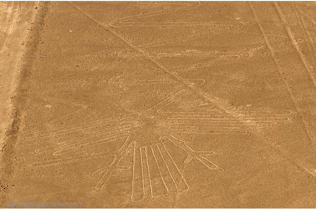 heron6543-001.jpg