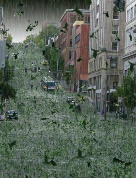 frog rain6288-001.jpg