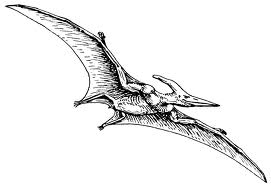 pterodactyl.jpg