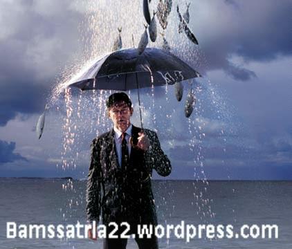 rain4249-001.jpg