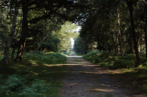 rendlesham-forest.jpg