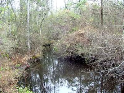 bs22-swamp.jpg