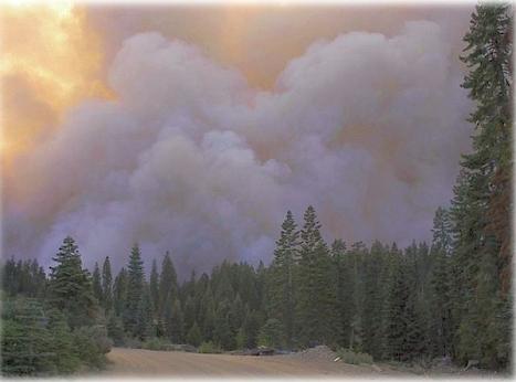 forestsmoke.jpg