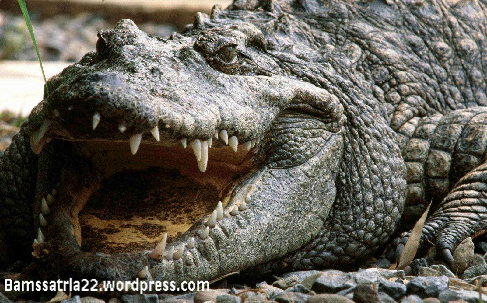irish croc-002.jpg