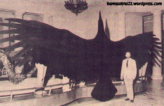 thunderbird-005.jpg