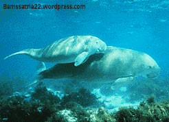 dugong-001.jpg