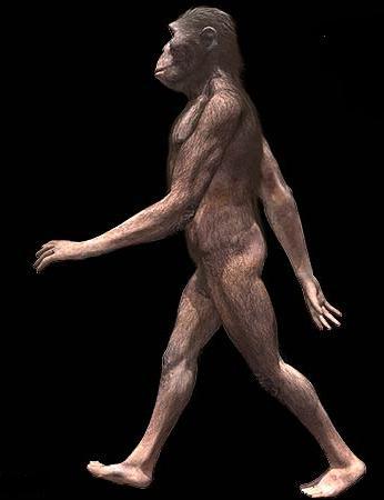 australopithecus2.jpg