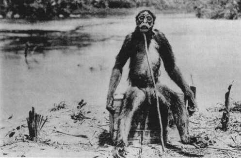 de loys ape2.jpg