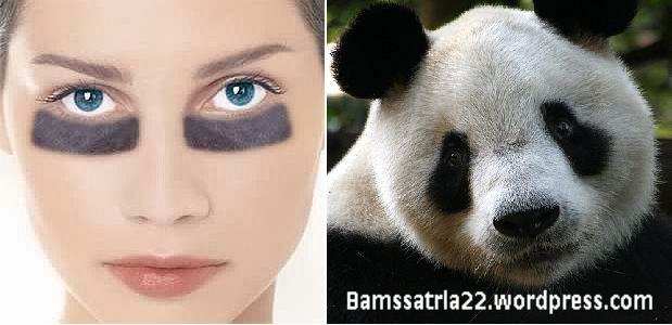 mata-panda-001.jpg