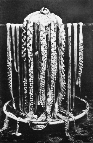 314px-logy_bay_giant_squid_1873.png