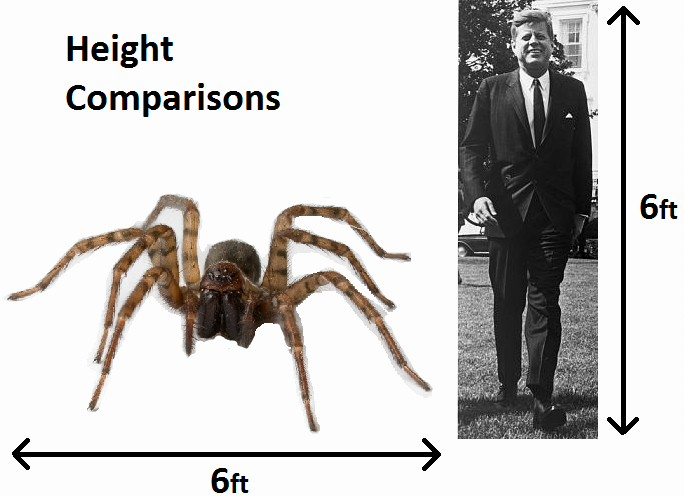 height comparison-001.jpg