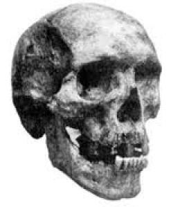 khwits-skull.jpg